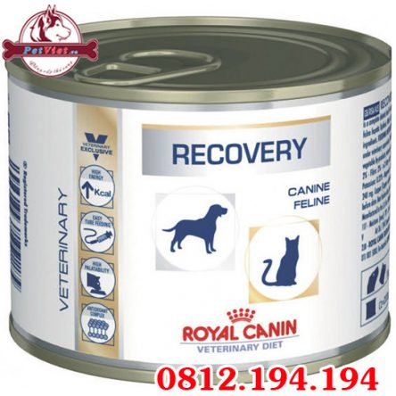Pate Royal Canin Recovery
